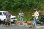 pemburu babi hutan sedang bersiap-siap menuju ladang perburuan babi hutan.